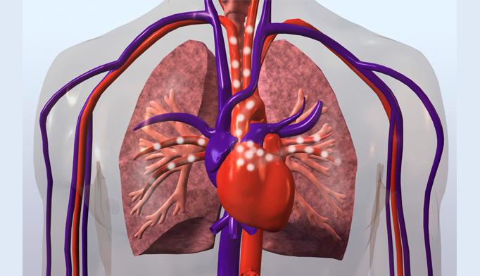 cardovascular system health
