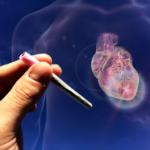 Marijuana, cardiovascular