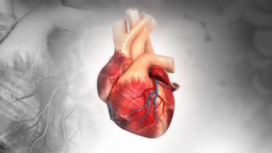 heart, valves, CHD, CAD