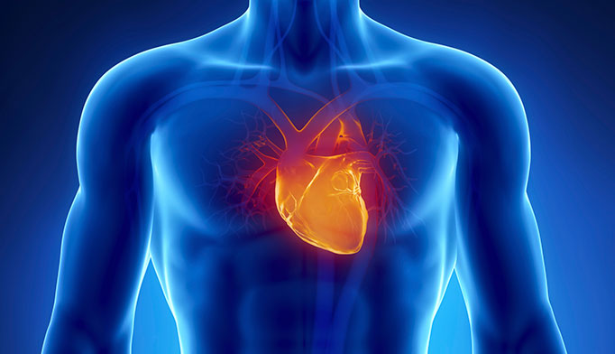 1-in-3 men have some form of cardiovascular disease, according to the American Heart Association. An estimated 2.8 million men experience stroke each year and hypertension is common in younger men. Routine check-ups are important to monitor heart health.